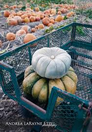 Best Pumpkin Patch Wichita Ks by 35 Best Kansas Farms Ranches U0026 Wineries Images On Pinterest