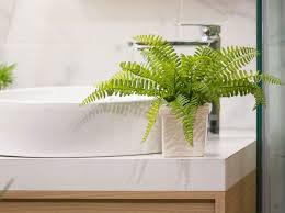 badezimmerpflanzen die 5 pflanzen sind perfekt geeignet