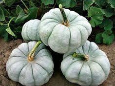 Kohala Pumpkin Patch 2014 by Dakota Strain Of The Howden Pumpkin East Hill Food Pinterest
