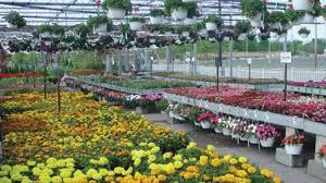 Petitti Garden Center Middleburg Heights Garden Centers