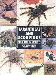 Do Tarantulas Shed Their Legs by Tarantulas Spider Spider Web