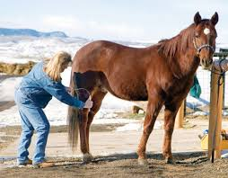 Shedding Blade For Horses by Help Your Horse Slick Off His Coat Expert Advice On Horse Care