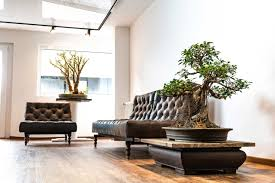 bonsai zimmergewächshaus gartenbonsai landschaftspflege