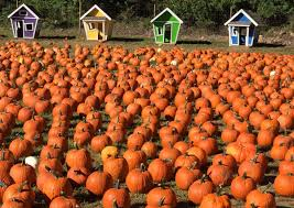 Spring Hope Pumpkin Festival 2014 by Home Demarest Farms Orchard Farm Store U0026 Garden Center