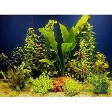 lot de plantes pour aquarium de 80 cm à prix avantageux chez zooplus