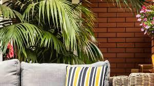 palmen als kübelpflanzen für terrasse und balkon vivanno