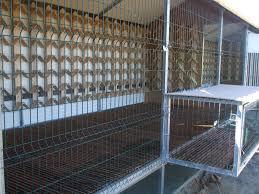 100 Pigeon Coop Plans Loft Design For Pigeon Slubnesuknieinfo