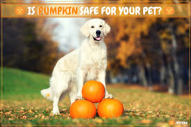 Dog Diarrhea Pumpkin by Is Pumpkin Safe To Give To Your Pet Jeffers Blogs