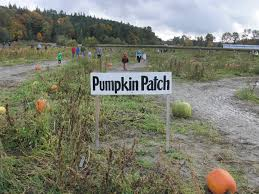Swan Pumpkin Patch Snohomish by Farm Gardening In My Rubber Boots