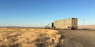 Cattle Trucks For Hire – Willow Creek Ranch Abel A Frame We Rent Trucks 590x840 022018 X 4 Digital Synergy Home Ryder Adds Electric For Sale Lease Or Transport Topics Rudolf Greiwing In Greven Are Us Hire Barco Rentatruck Barcorentatruck Twitter Rentals Cerni Motors Youngstown Ohio On Hire Ring Road No 2 Bhanpuri Raipur A New Volvo Fh Raptor Pinterest Trucks And Book Now Cement Mixer By Inc For Rental Truck Accidents The Accident Team