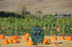 Pumpkin Patch San Jose 2017 by Spina Farms Picture Of Spina Farms Pumpkin Patch San Jose