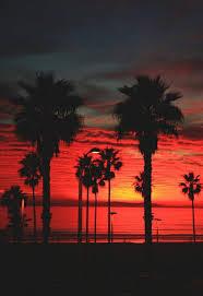 Alternative Background Beautiful Palm Tree Photography Image Trees Sunset Tumblr