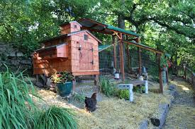 Iowa Coop   BackYard Chickens Best 25 Chicken Runs Ideas On Pinterest Pen Wonderful Diy Recycled Coops Instock Sale Ready To Ship Buy Amish Boomer George Deluxe 4 Coop With Run Hayneedle Maintenance Howtos Saloon Backyard Images Collections Hd For Gadget The Chick Chickens Predators Myth Of Supervised Runz Context Chicken Coop Canada Dirt Floor In Run Backyard Ultimate By Infinite Cedar Backyard Coup 28 Images File