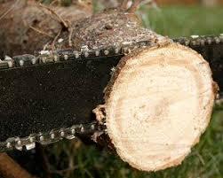 Christmas Tree Preservative Recipe Sugar by Make Christmas Tree Last Longer Lovetoknow