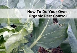 Do My Own Pest Control Coupon Code - COUPON