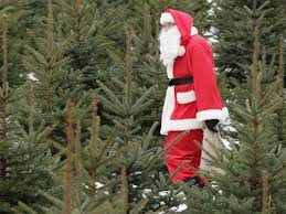 Fresh Christmas Trees Types by Top Places To Buy Your Christmas Tree And Decorations Around