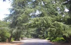 Christmas Tree Lane Fresno Ca History by Fig Garden History U2013 Fresno U0027s Historic Treasure Jim U0027s Fig Garden