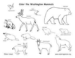 Coloring Pages Of Birds Migrating Washington Habitats Mammals Amphibians Reptiles