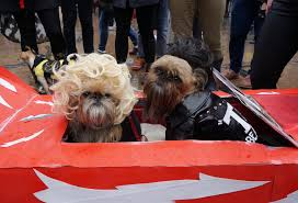 Tompkins Square Park Halloween Dog Parade 2015 by Costumed Puppy Cuteness At Tompkins Square Halloween Dog Parade 2016
