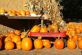 El Paso Pumpkin Patch by Venetucci Farm Pikes Peak Community Foundation