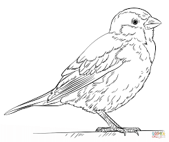Click The House Sparrow Coloring