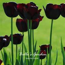 buy purple flowers bulbs and get free shipping on aliexpress