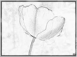 Dessin à Colorier Trésors DOrient Les Tulipes