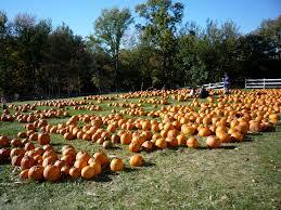 Pumpkin Picking Maine by Visiting Adams Farm In Cumberland R I