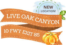 Oak Glen Pumpkin Patch Address by The Pumpkin Factory Pumpkin Patch Home