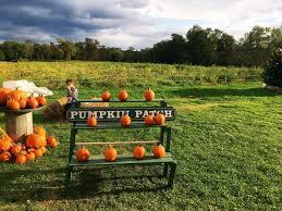 Pumpkin Picking In Ct by Dog Friendly Pumpkin Picking U0026 Corn Maze In Fairfield County