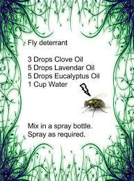 best 25 homemade fly repellant ideas on pinterest fly spray