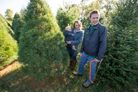 Ticks On Christmas Trees by Real Christmas Tree Or Artificial Tree You Decide Angie U0027s List