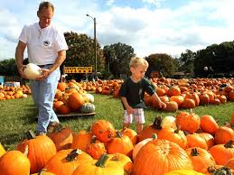 Hayden Idaho Pumpkin Patch by Pumpkin Patches Open This Weekend In Area News Ocala Com