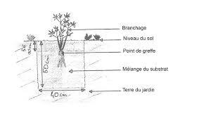 pivoine herbacee en pot les pivoines arbustives et herbacees inspirations desjardins