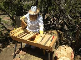 Les Crowder | Zeebeeman's Blog Top Bar Hive Honey Harvest By Jon Peters Youtube Bees In Ca Bkeeping With Les Crowder How To Straighten Top Bar Combs Queen Victoria Sept 18 Nuc Install Equipment Decisions Kenyan Part 1 Browns Dtown April 2013 Natural Topbar Bkeeping Lesson Learning From The Master Hives Swarm After 6 Weeks Lindas June 2012 Beehive Update May 2015