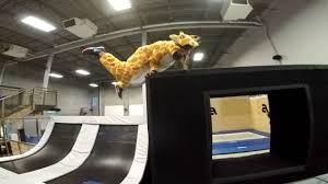 100 Airhouse Giraffe In The
