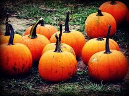 Best Pumpkin Patch Torrance by Oct 3 Pa U0027s Pumpkin Patch Petting Zoo Carnival Rides U0026 Games