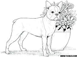Realistic Dog Coloring Pages Beagle