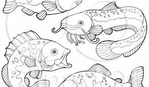 Pin Drawn Fishing Freshwater Fish 12