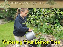 how to grow a lemon tree in arizona