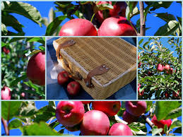 Apple Pumpkin Picking Queens Ny by Mille Fiori Favoriti Fall Fun