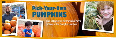Mccalls Pumpkin Patch Employment by Mesilla Valley Maze Las Cruces Nm Pumpkins Fall Fun Corn