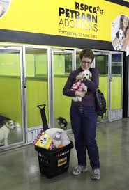 Petbarn National Pet Dating Day 2017 - Feb 11 | Australian Dog Lover You Me Pitch Roof Dog Kennel Small Petbarn Pet Barn Leads On Pet Christmas Gifts Australian Newsagency Blog Amazoncom Petmate Houses Supplies Petbarn Pty Ltd Chatswood Nsw Merchant Details Double Medium Blacktown Mega Centre The Local Business Rothwell Redcliffe Australia Signs Store Stock Photo My 3 Rescue Chis Decked Out For December Holidays 2015 Fab Hermit Crab Enclosure Vanessa Pikerussell Flickr Pleasant Royal Canin German Spherd Food 12kg Pet2jpg