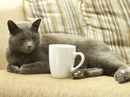 cat coffee would you like a cat with that coffee yes
