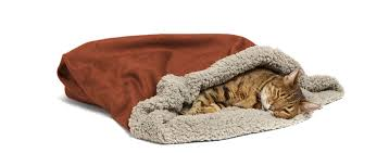Burrowing Dog Bed by Top 5 Beds Pets Will Love Name Brand Dog Cat Beds Team Pet Supply