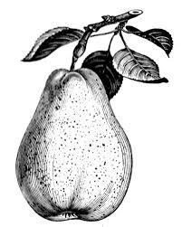 Vintage Pear Williams Image