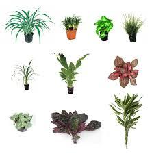 lot de plantes pour terrarium semi humide 10 plantes zone
