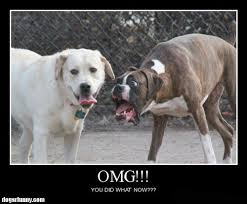 Omg You Did What Funny Dogs Motivational Poster Picture OMG