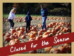 Pumpkin Picking In Chester Nj by Stony Hill Farm Market Maze Fun Park And Gardens Chester Nj