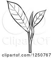 Clipart Of A Black And White Tea Leaf Plant Royalty Free Vector Illustration